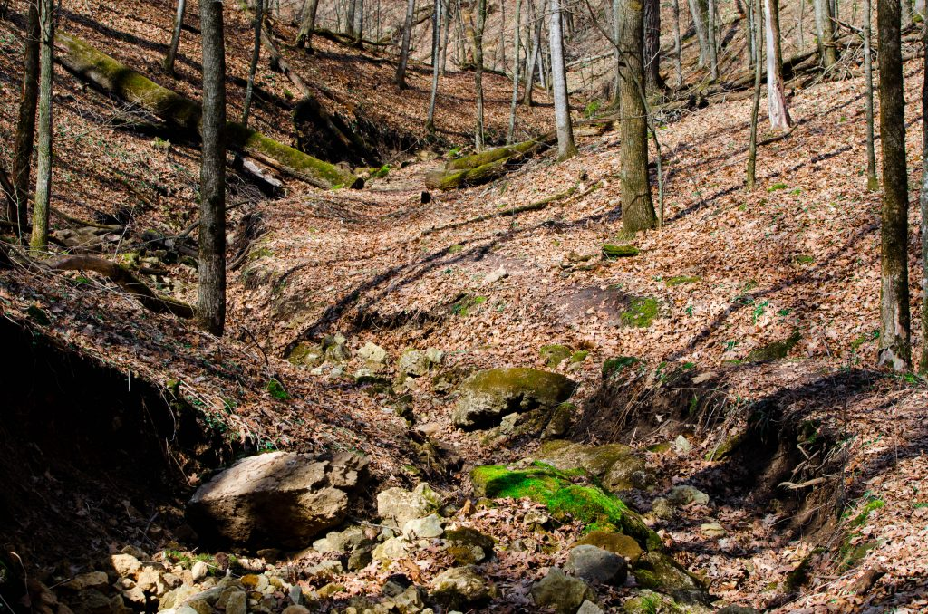 yellow_river_state_forest